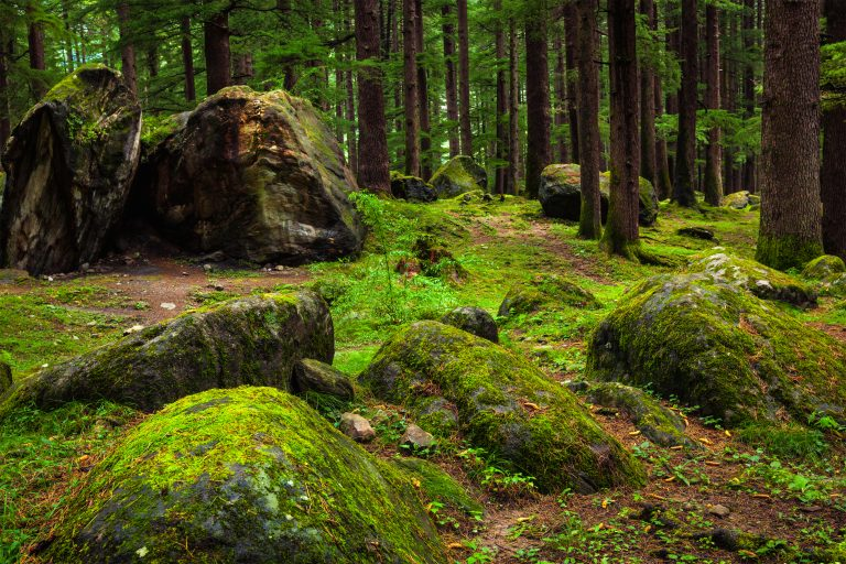 Nature Therapy at Hocking Hills